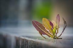 Mala hierba que crece a través del pavimento imágenes de archivo libres de regalías