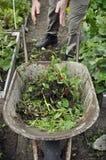 Mala hierba que lanza del jardinero en una carretilla Imagen de archivo
