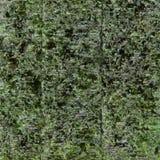 Mala hierba secada del mar Fotografía de archivo libre de regalías