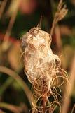 Mala hierba y abajo en caída Fotografía de archivo libre de regalías
