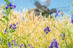 Mala på vetefältet Royaltyfria Foton