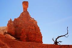 Mala sombra de la cabeza de martillo y pequeño árbol muerto Fotografía de archivo