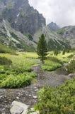 Mala studena dolina hiking trail in High Tatras, summer touristic season, wild nature, touristic trail. Mountain stream Royalty Free Stock Photos