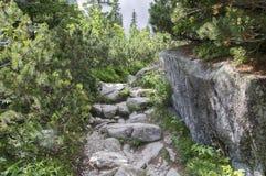 Mala studena dolina wycieczkuje ślad w Wysokim Tatras, lato turystyczny sezon, dzika natura, turystyczny ślad obrazy stock