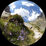 Mala studenadolina - dal i höga Tatras, Slovakien Arkivbilder