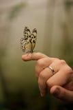 Malabar drzewna boginka umieszczająca na małym palcu Fotografia Royalty Free