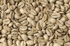 Malabar green unroasted coffee beans Stock Image