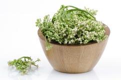Malabar spinach or Ceylon spinach (Basella alba Linn.). Royalty Free Stock Images