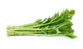 Malabar spinach or Ceylon spinach Stock Photography