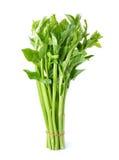 Malabar spinach or Ceylon spinach Stock Photo