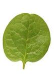 Malabar spinach Stock Photo