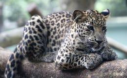 Malacca ζωολογικός κήπος, Μαλαισία Στοκ Εικόνες