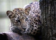 Malacca ζωολογικός κήπος, Μαλαισία Στοκ Φωτογραφίες