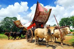 Malacca Bullock Cart. Is an transportation in Malaysia and nowadays used for carry tourist for a ride Stock Photos
