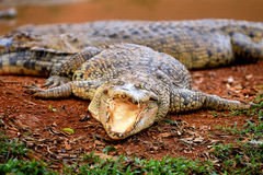 Malacca Crocodile Farm Royalty Free Stock Photography