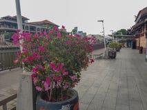Malacca Malaysia - Juni 2019: Blommor nära maritimt museum royaltyfri fotografi