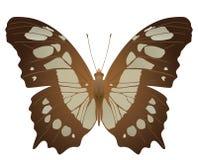 Malachite butterfly Royalty Free Stock Photo