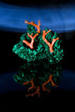 Malachite and coral jewerly compozition Royalty Free Stock Photos