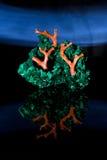 malachite för compozitionkorall jewerly Royaltyfria Foton