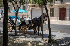 MALAGA, ANDALUCIA/SPAIN - MAJ 25: Tradycyjny koń i Carriag Zdjęcia Royalty Free