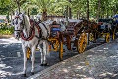 MALAGA, ANDALUCIA/SPAIN - MAJ 25: Tradycyjny koń i Carriag Zdjęcia Stock