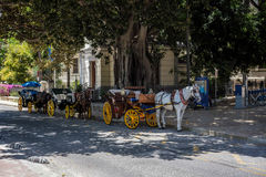 MALAGA, ANDALUCIA/SPAIN - MAJ 25: Tradycyjny koń i Carriag Fotografia Stock