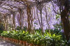 Malaga Botanical Gardens stock photo