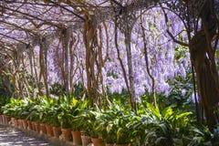 Malaga botaniska trädgårdar Arkivfoto