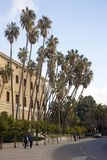 Malaga, Hiszpania, Luty 2019 Museo Prowincjonał De Las Bellas Artes Rząd piękni nikli drzewka palmowe obrazy royalty free