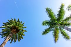Malaga Palm Trees with clear summer skies and an flying plane. Malaga Palm Trees with clear sunny summer skies and an flying plane stock photography