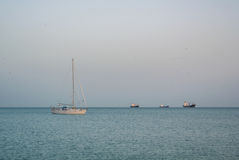 MALAGA, SPAGNA - 16 FEBBRAIO 2014: Una pesca sola della barca al mare di Meditarrain con un'abbondanza dei gabbiani ai precedenti Immagini Stock Libere da Diritti