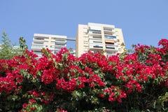 Malaga, Spain. Spanish seaside town of Malaga Stock Images