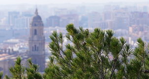 Malaga sun light day famous cathedral pine view 4k stock video footage