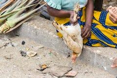 Malagasy γυναίκα που κρατά ένα ζωντανό κοτόπουλο έτοιμο να πωληθεί στην αγορά σε Toliara Μαδαγασκάρη στοκ φωτογραφία