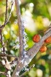 Malagasy ζωύφια λουλουδιών Στοκ φωτογραφίες με δικαίωμα ελεύθερης χρήσης