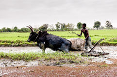 Malagasy farmers plowing agricultural field Royalty Free Stock Image