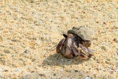 Malagasy Hermit crab. Hermit crab on the beach of Masoala, Madagascar Stock Photo