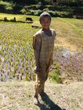 Malagasy native boy Royalty Free Stock Images