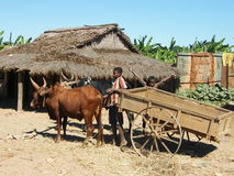 Malagasy natives. Doing their everyday work Royalty Free Stock Photo