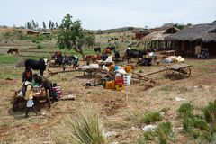 Malagasy peoples on farm in rural Madagascar Royalty Free Stock Images