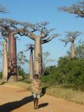 Malagsy indigène près des arbres de baobab Photographie stock