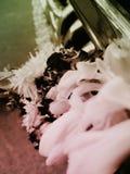 Malai blomma Royaltyfria Bilder
