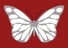 Malalachite motyl Zdjęcia Royalty Free