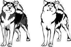Malamute породы собаки вектора иллюстрация штока