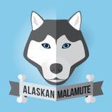 Malamute d'Alasca Immagine Stock