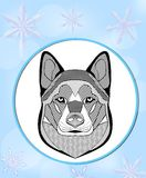 Malamute head. Flyer with malamute dog head on light blue background with snowflakes. Graphic template for dog racing, mushing. Bl Stock Image