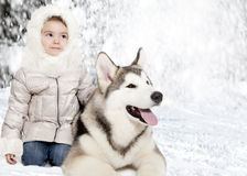 Malamute puppy with a little girl Stock Images
