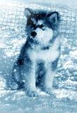 Malamute utanför i snö Arkivfoto