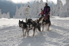 Malamute van Alaska dogsled op Velka Destna stock foto