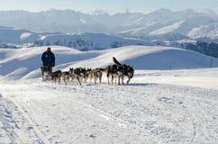 Malamute van Alaska sleddog in Alpen Nockberge -nockberge-longtrail stock fotografie